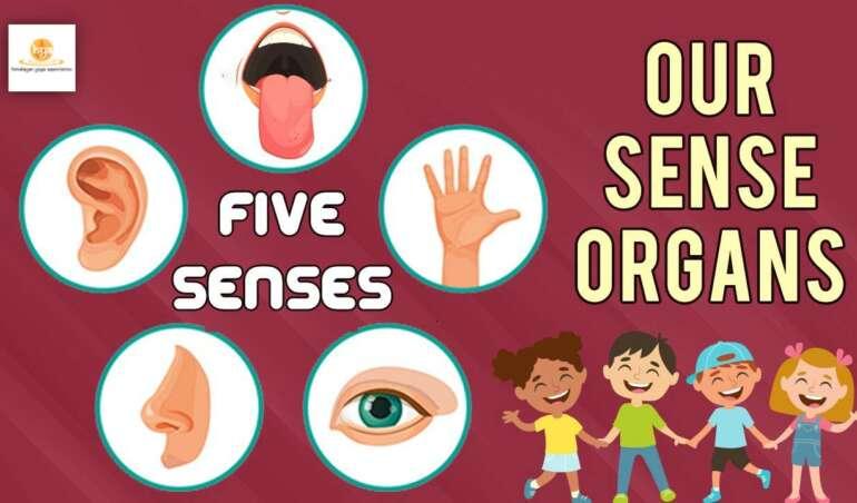 5-organ-senses
