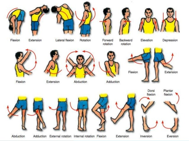 yoga anatomy movements